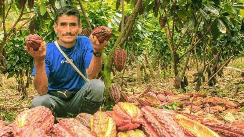 Cerca de 44 mil familias agricultoras apostaron por el desarrollo alternativo promovido por Devida
