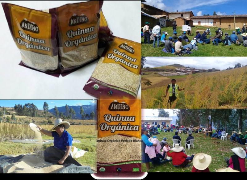 Cerca de mil familias productoras de quinua orgánica inician abastecimiento a PlazaVea
