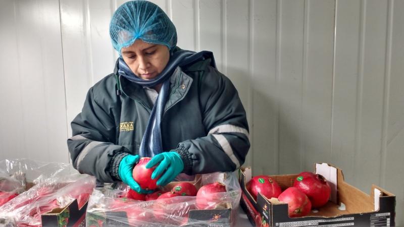 China conoce certificación fitosanitaria de granadas peruanas con fines de exportación