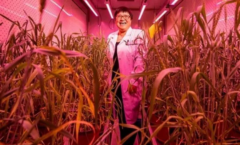 China construye mayor banco de germoplasma del mundo para impulsar la seguridad alimentaria