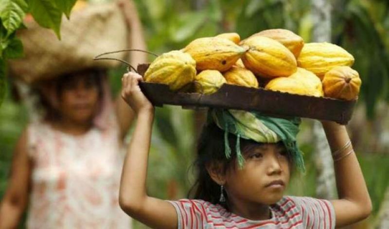 Chocolates tendrían que subir su precio en 2.8% para reducir trabajo infantil