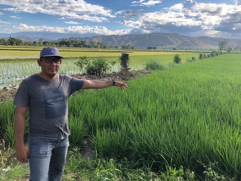 Claves para cultivar un mayor rendimiento en el arroz