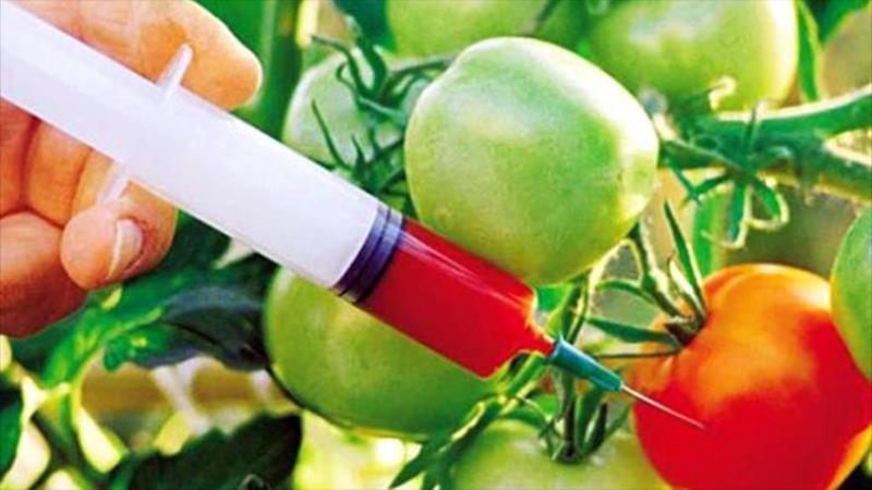 ComexPerú a favor del uso de transgénicos en la agricultura peruana