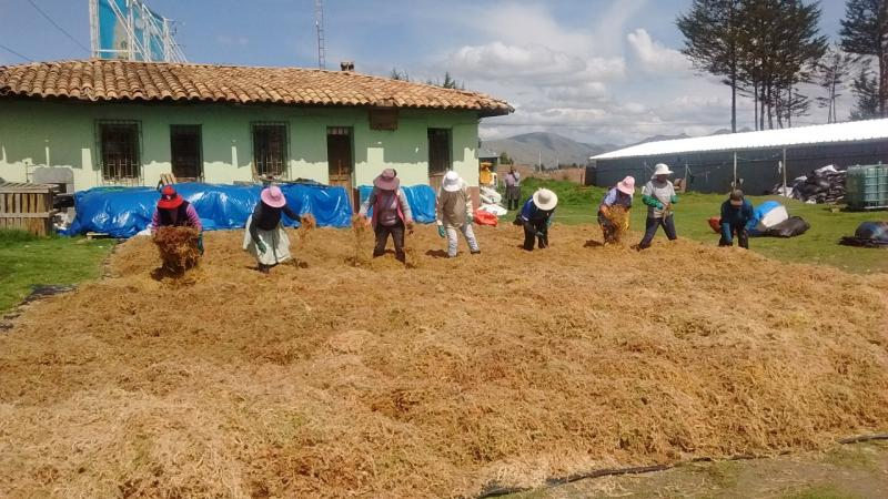 Comprar musgos propicia extracción ilegal y causa deterioro de bosques