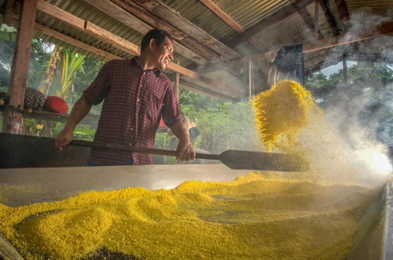 "Comunidad ticuna lanzará fariña ""Amarillita"" al mercado nacional durante la Expoamazónica 2019"