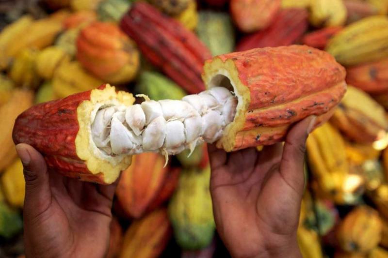 Concytec financia proyecto para reducir cadmio en cacao
