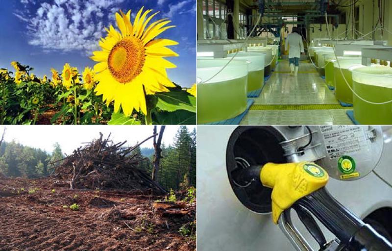 Consumo mundial de biocombustibles aumentará hasta un 8% este año tras débil 2020