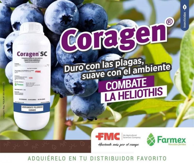 Coragen SC, insecticida eficiente en el control de plagas y selectivo con los insectos benéficos