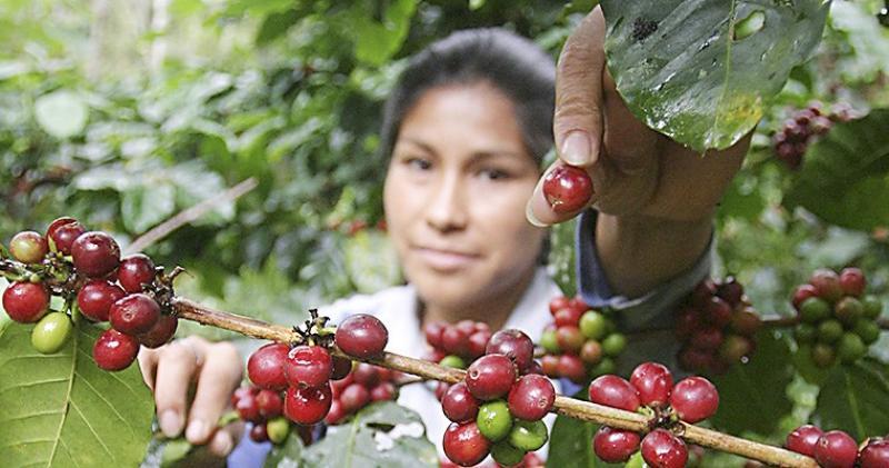 Crean Grupo de Trabajo encargado de articular las acciones sectoriales y regionales vinculadas a la cadena de valor del café