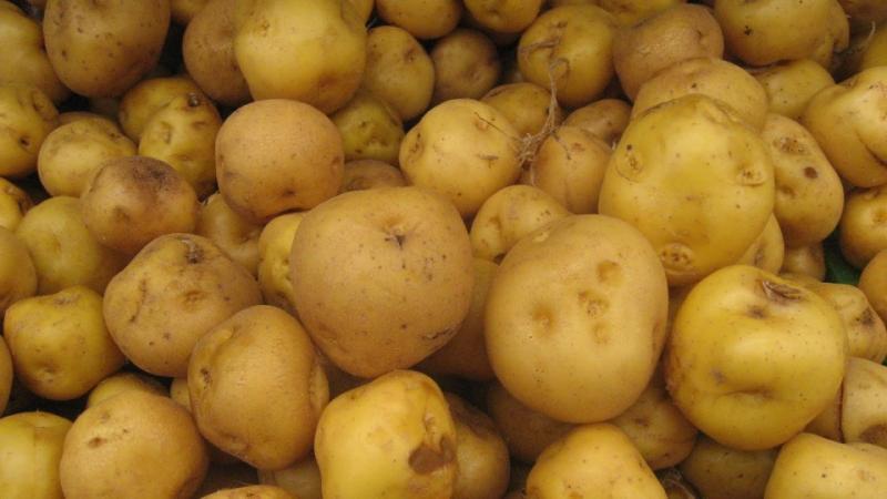 Crece moderadamente la exportación de papa amarilla congelada