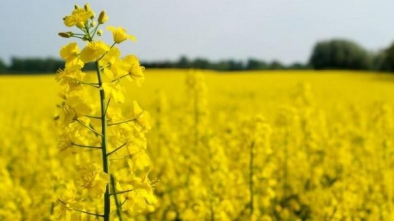 Cultivos genéticamente modificados podrían impulsar industria frutícola en Chile