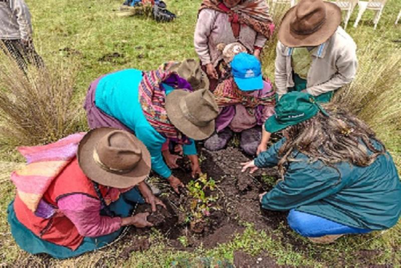 Cusco: inician instalación de 10 mil plantones en cuencas de Anta para protección ante lluvias