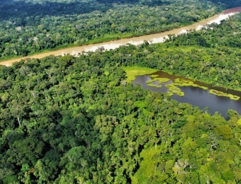 Deforestación se reduce en diez regiones con bosques amazónicos