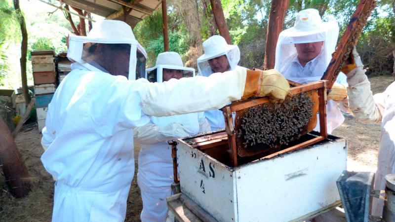 Demanda de colmenas aumentará entre un 20 % y 30 % el 2020 debido a la ampliación de la frontera agrícola