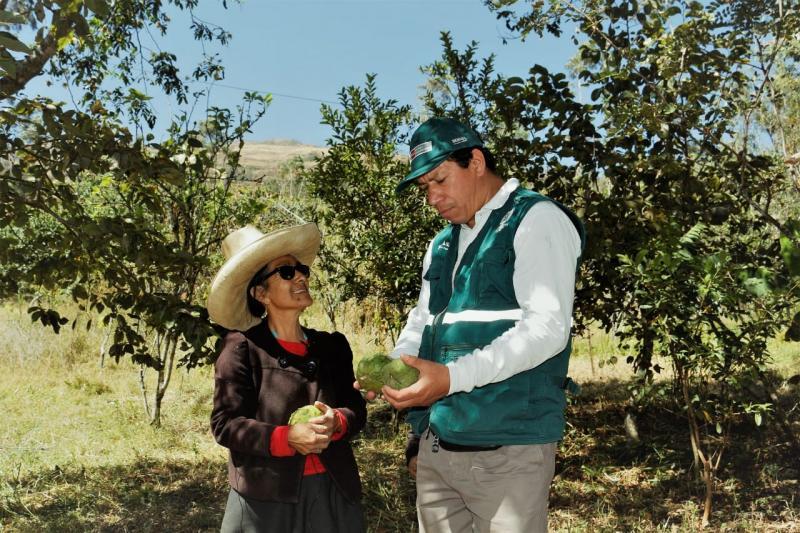 Desarrollan acciones sanitarias en Cajamarca para mejorar la productividad de la chirimoya