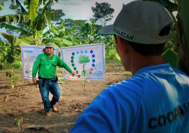 Devida impulsa producción orgánica de cacao en la provincia de Satipo