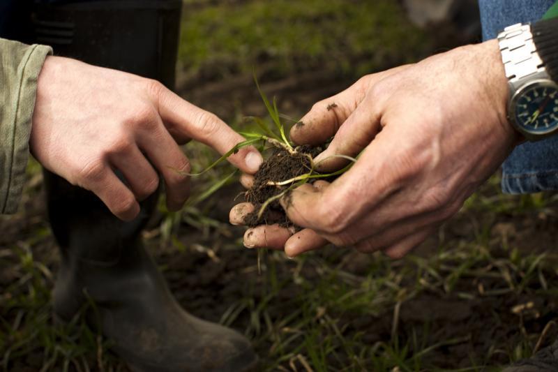 Día Mundial del Suelo - Urge preservar la productividad del suelo