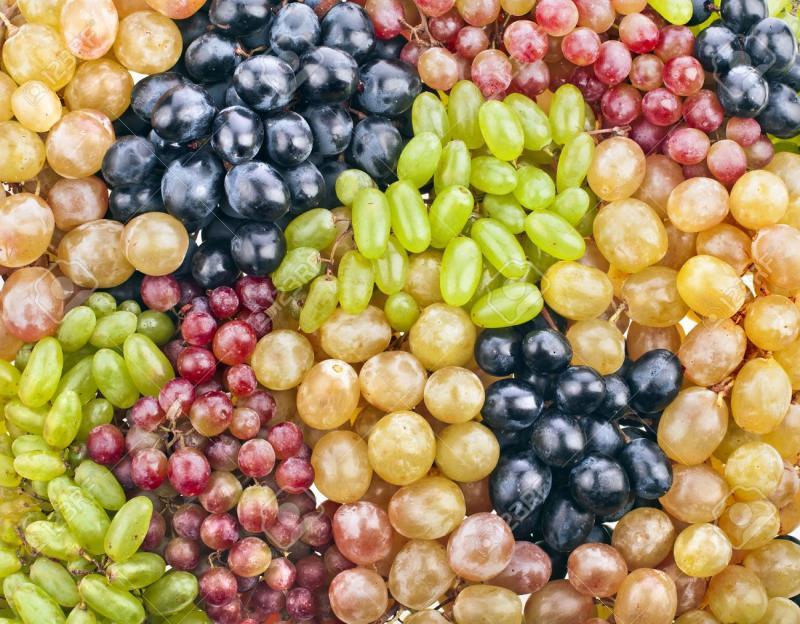 Disminuye participación de Red Globe en los despachos de uva de mesa de Perú en la presente campaña