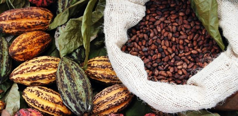 Ecuador es el primer exportador de cacao en grano de América