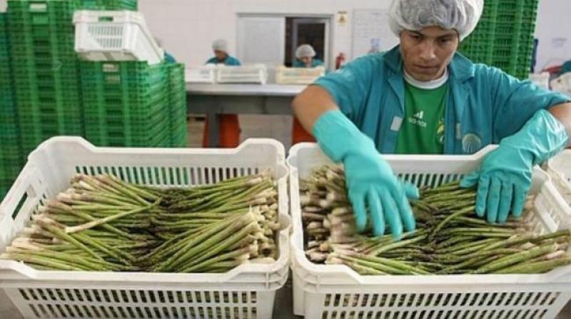 Ejecutivo propone ampliar vigencia de la Ley de Promoción Agraria a 21 años