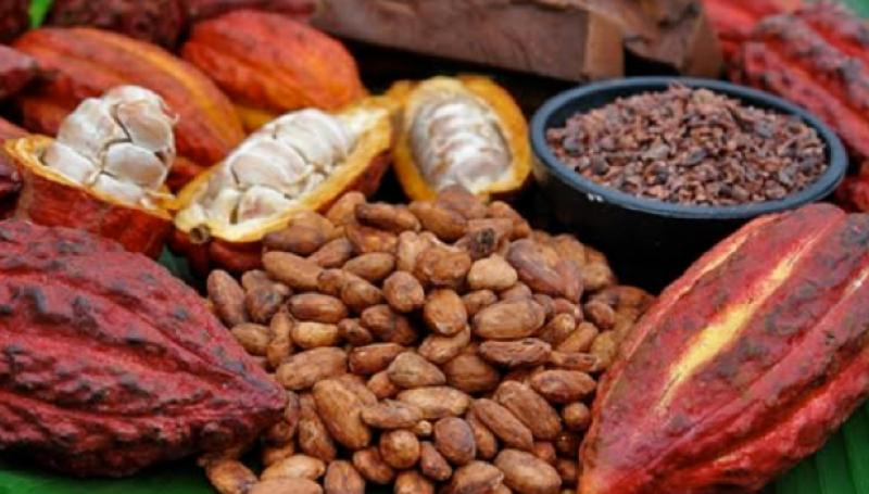 El 20% del cacao peruano se exporta a Bélgica