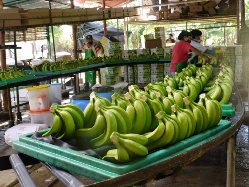 El 8.2% de las áreas agrícolas en Perú se dedica a la producción orgánica