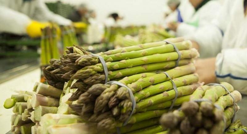 El año pasado, Perú perdió el mercado australiano para sus espárragos por problemas sanitarios
