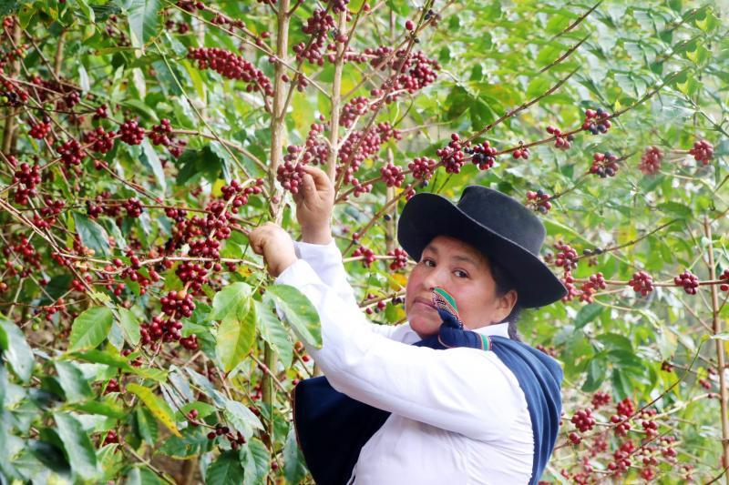 El mejor café del Perú 2020 procede de Cusco