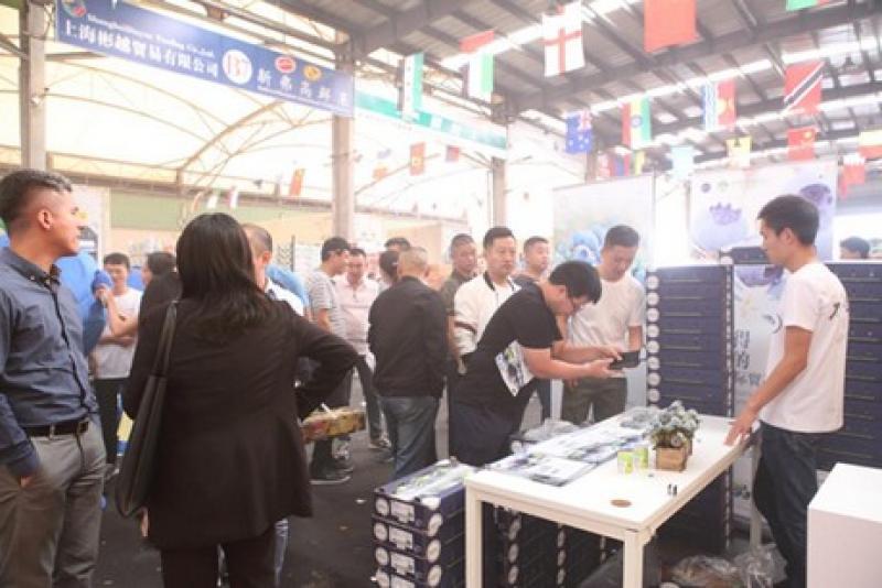 El primer contenedor de arándanos OZblu peruanos llegó a China