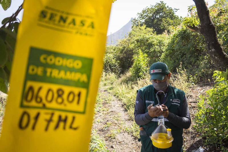 El próximo año Cajamarca acelerará el paso para convertirse en área libre de mosca de la fruta