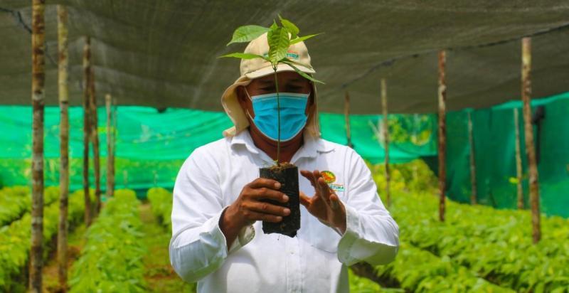 El reto de una cadena de cacao libre de deforestación