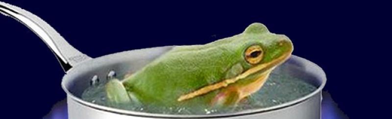 El síndrome de la rana y los indicadores de gestión.