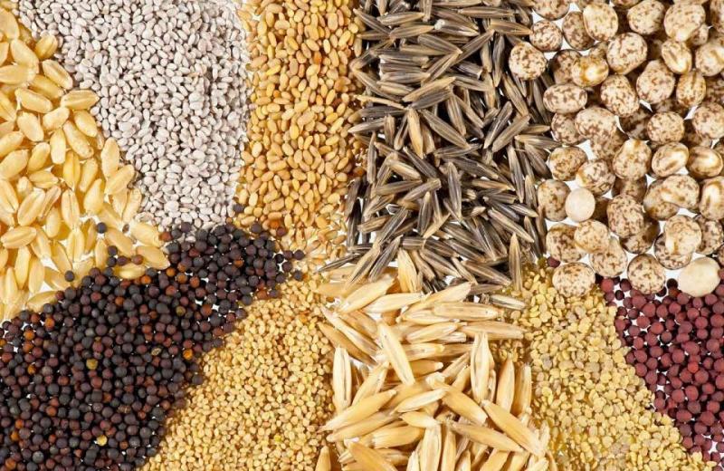 El uso de semillas de calidad es un factor clave para el desarrollo sostenible de la actividad agrícola en el país