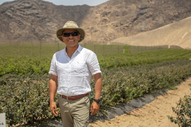 En tres años Perú contará con 20 mil hectáreas de arándanos y consolidará su liderazgo mundial en exportación de esta fruta fresca