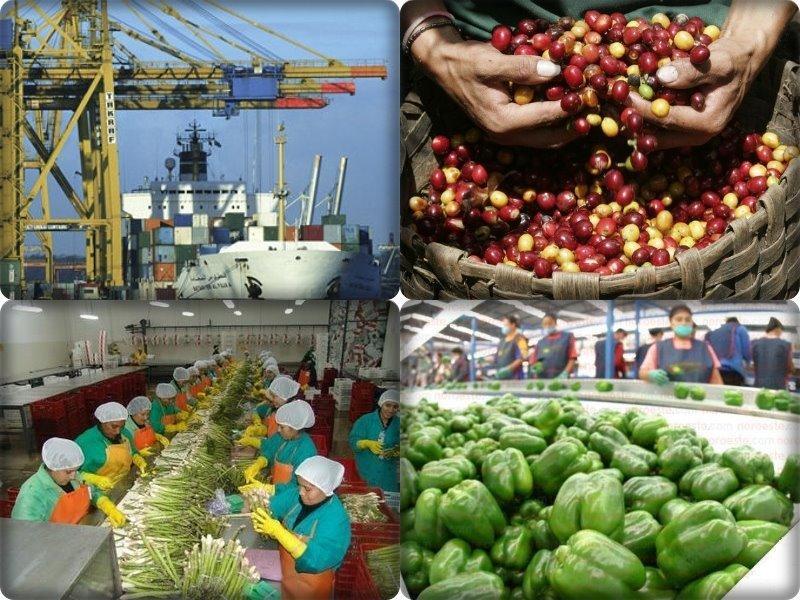 Estados Unidos y Países Bajos concentraron el 52% de las agroexportaciones peruanas en el primer bimestre