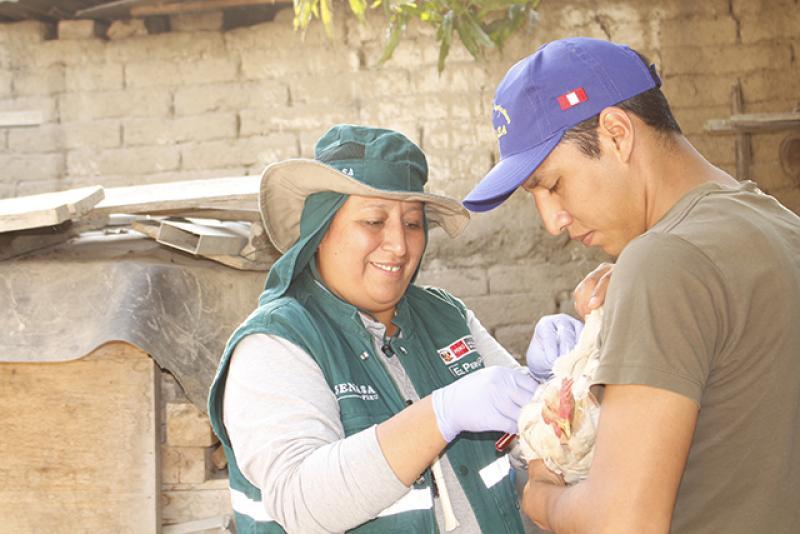 Evalúan condición sanitaria de aves domésticas en Cajamarca