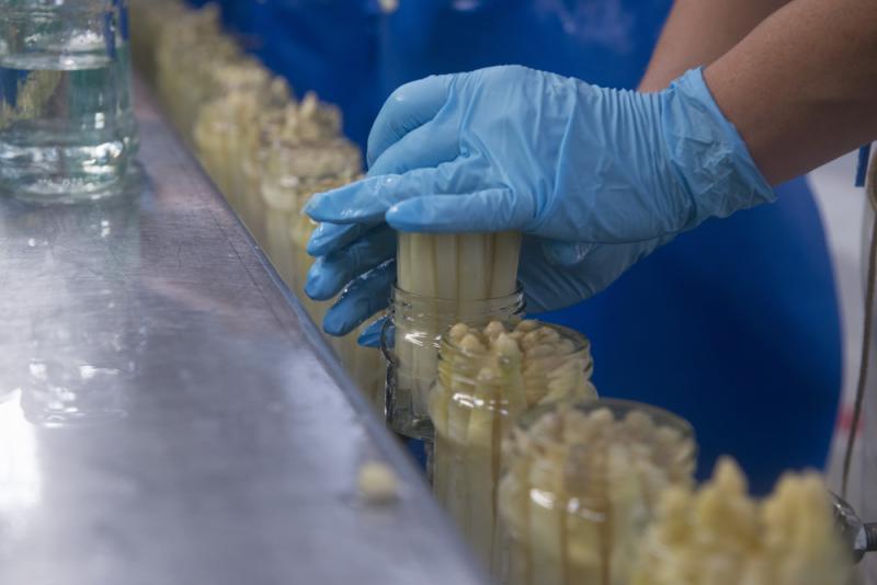 Exportación de espárragos en conserva cerró el año pasado en US$ 94.8 millones