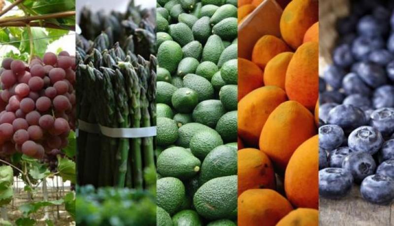 Exportación de frutas y hortalizas concentran el 74.2% de la agroexportación no tradicional en 2019
