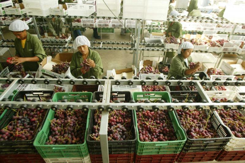 Exportación de uva creció 14.5% en octubre
