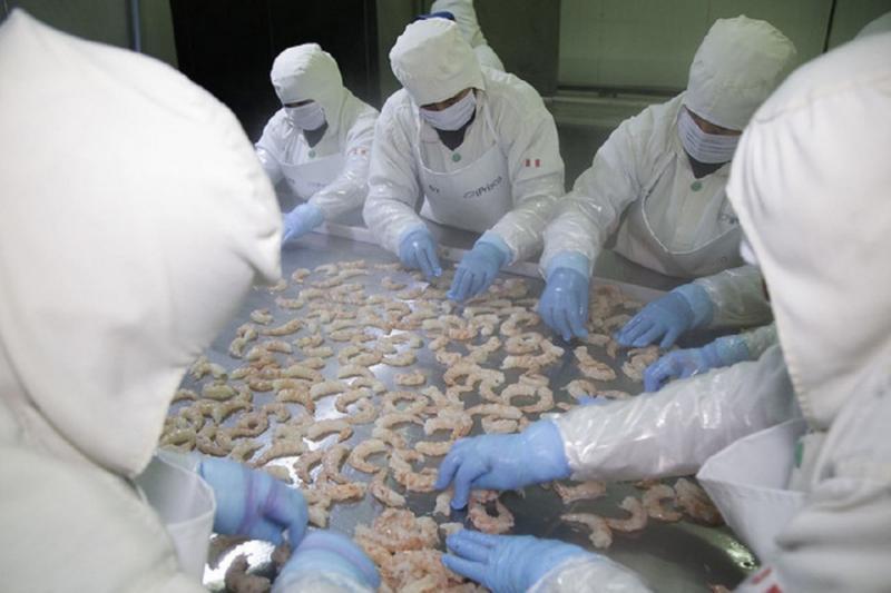 Exportación peruana de langostinos provenientes de la acuicultura creció 20.4% en primer trimestre del 2021