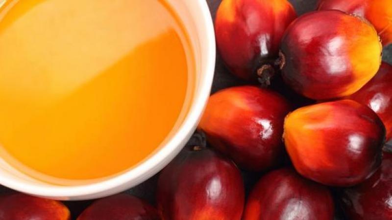 Exportaciones de aceite de palma superaron los US$ 15 millones durante los primeros cinco meses del año