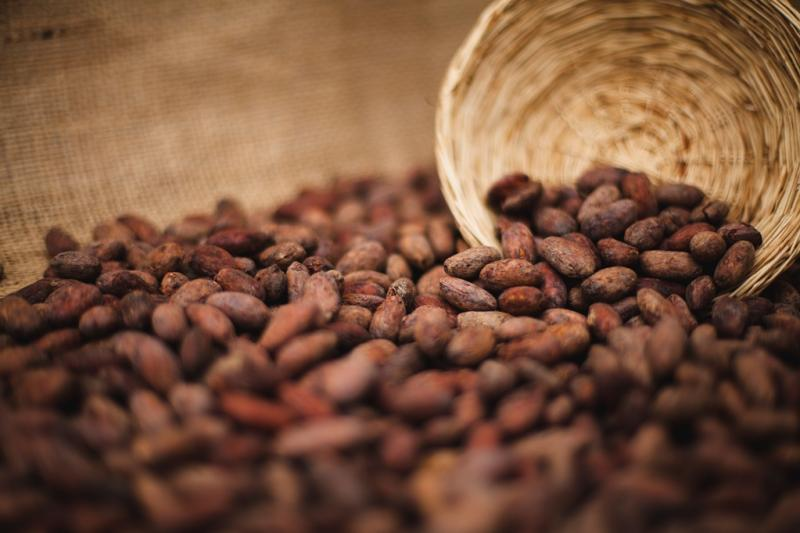 Exportaciones de cacao y derivados crecieron 11% entre enero y octubre de 2019