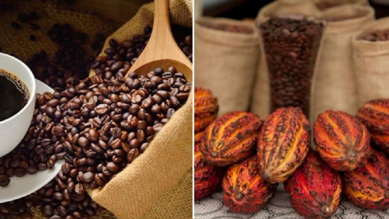 Exportaciones de café y cacao superarían los US$ 1.000 millones este año
