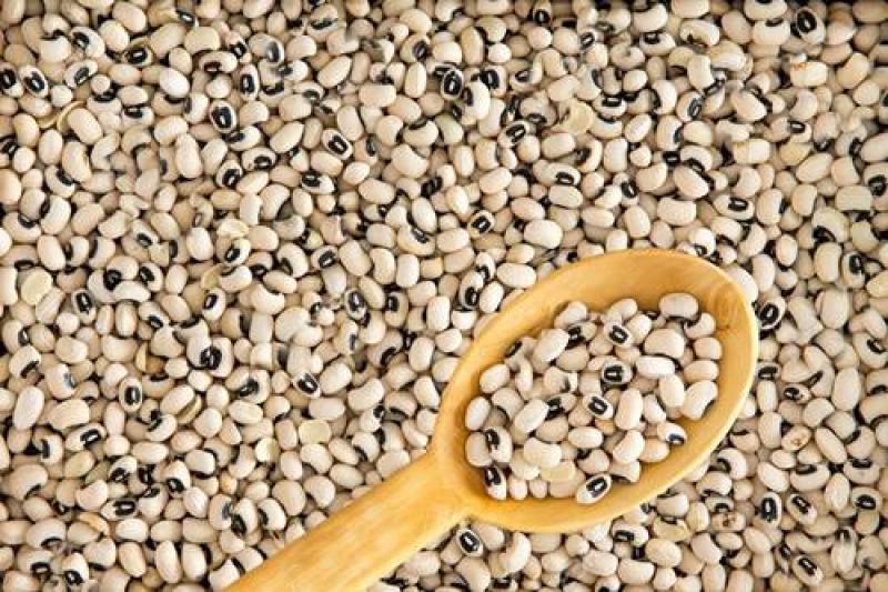 Exportaciones de frijol castilla alcanzaron valores de US$ 1.8 millones durante el primer trimestre