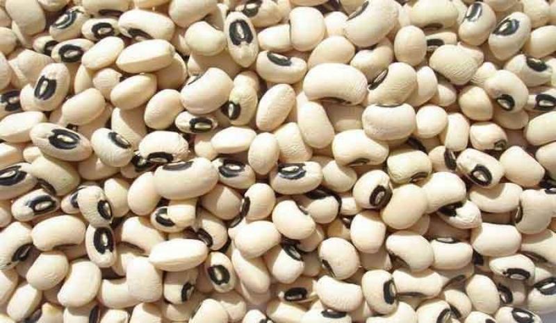 Exportaciones de frijol castilla crecieron y llegaron a US$ 9.7 millones en 2019