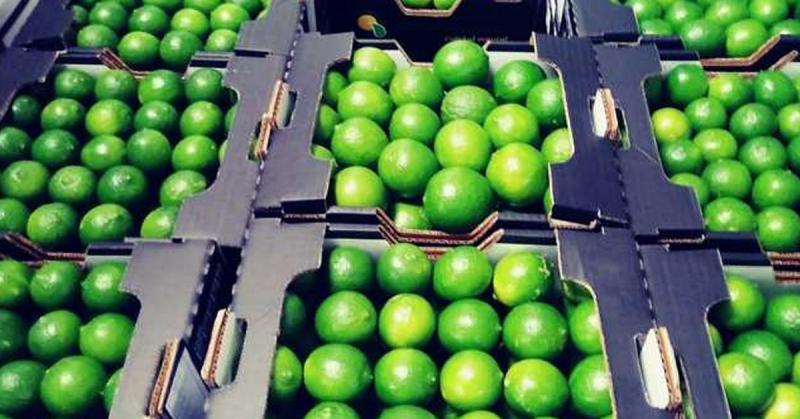 Exportaciones de limón de Piura crecieron 19.5% en 2019