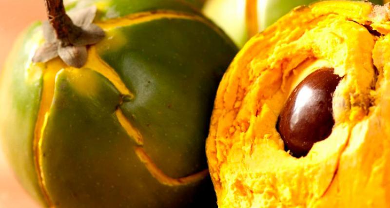 Exportaciones de lúcuma crecieron en valor 23.34% durante enero-agosto del presente año