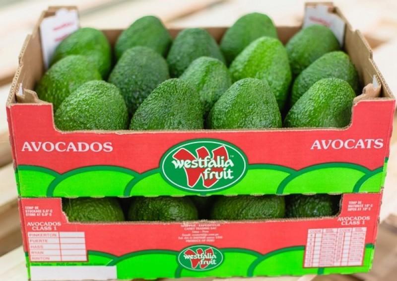 Exportaciones de palta fresca de Westfalia Fruit Perú aumentarían 30% este año