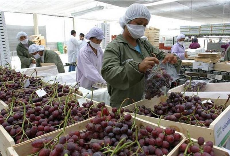 Exportaciones de uva de mesa en la campaña 2019/2020 crecerían menos de lo proyectado