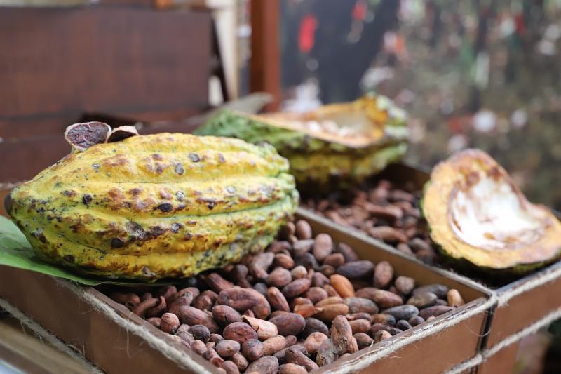 Exportaciones peruanas de cacao y derivados crecieron 13% durante enero-noviembre del 2018